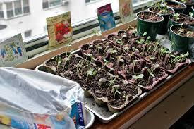 start garden indoors tips tricks get planting now