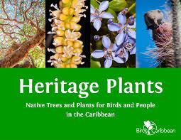 native plant restoration international migratory bird festival focuses on caribbean habitat