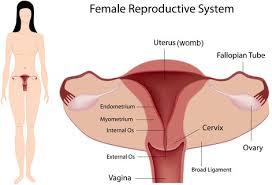 Female Abdominal Anatomy Pictures Causes Of Female Abdominal Pain Diagnosis U0026 Treatment Abdopain Com