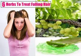 home remedies for hair loss for over 50 6 herbs to treat falling hair search herbal home remedy