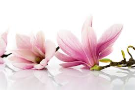 Fragrant Flowers Stop And Smell These Fragrant Flowers Grower Direct Fresh Cut
