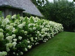 Fence Line Landscaping by Best 25 Privacy Fence Landscaping Ideas On Pinterest Fence