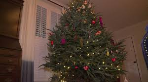 check your christmas trees for bugs wcnc com