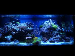 best lighting for corals coral reef fish aquarium 75 gallon hd saltwater tank update youtube