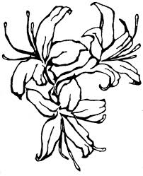 Wedding Flowers Drawing Honeysuckle Flower Drawing Larkspur Drawing Google Search