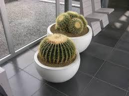 plantes pour bureau achat de plantes de bureau