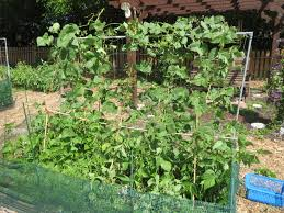 uncategorized wellspring food pantry garden blog