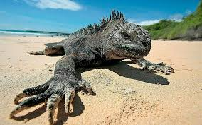 Iguana Island 5 Facts You Didn U0027t Know About The Galapagos Islands Casa Natura