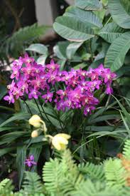 heat loving plants 8 heat tolerant plants for containers