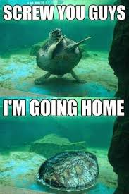 Memes That Are Actually Funny - 29 hilarious turtle memes that are so funny they re actually dangerous