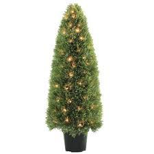evergreen shrubs trees u0026 bushes the home depot