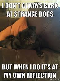 How To Create A Meme With Your Own Picture - join me and make a fun meme of your pet
