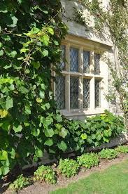 87 best ivy in the garden images on pinterest gardens ivy