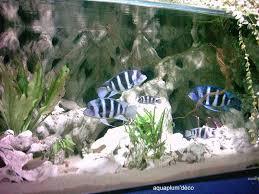 idee deco aquarium deco avec aquarium aquarium superfish 27 litres avec décoration