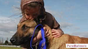 belgian malinois breeder california akc belgian malinois puppies for sale in texas breeders u0026 trainers
