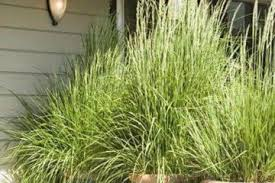 commercial outdoor planters archives backyard mastery