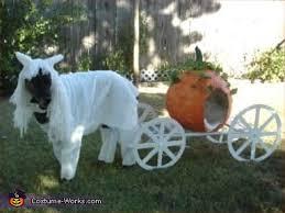White Dog Halloween Costume Cinderella U0027s White Horse Pumpkin Carriage Costume Pumpkin