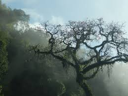 free photo tree mountain san javier tucumán free image on