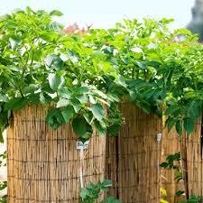 Vegetable Garden Bed Design by 14 Best Garden Enabled Images On Pinterest Raised Gardens
