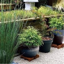 Bamboo Garden Design Ideas Yes Bamboo Garden Do At Home Important Garden Design Ideas