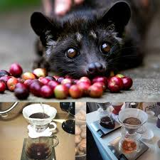 Luwak Coffee kopi luwak bali coffee luwak