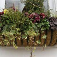 Window Boxes Planters by Incredible Window Box Planters Stands Design Ideas Of Incredible