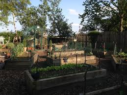self sufficiency u2013 gardening with boys