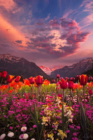 Flower Pictures 332 Best Fields Of Flowers Images On Pinterest Landscapes