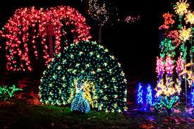 the dazzling light displays of bellevue botanical garden d lights