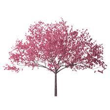 cherry blossom tree 28 hd wallpaper jpg roblox