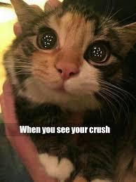 Cute Cat Memes - best 25 cute cat memes ideas on pinterest cat memes funny cat