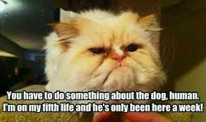 Funny Kitten Memes - funny kitten memes largest place for funny kitty and cat memes