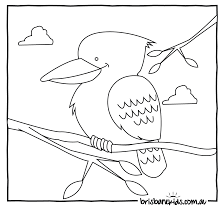download wombat animal coloring pages