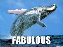 Whale Meme - whale fabulous meme on imgur