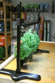 growing herbs indoors under lights 24 best seed starting images on pinterest planting seeds seed