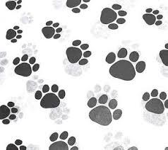 paw print tissue paper paw print on white tissue paper 309 gift wrap dog cat pet