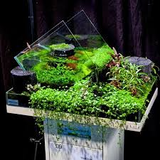 Aquascape Environmental 90 Best Aquascape Images On Pinterest Aquarium Ideas