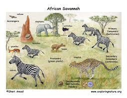 grade 2 2 ls4 biological evolution unity and diversity