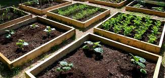 How To Start A Garden Bed How To Start A Vegetable Garden For Beginners