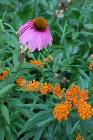 native north american plants north carolina u0027s list of the ten top choices for native plants