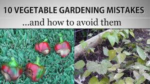 10 vegetable gardening mistakes and how to avoid them in 4k