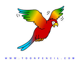 flying parrot drawing clipart panda free clipart images