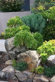 25 trending succulent rock garden ideas on pinterest outdoor