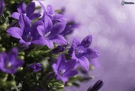 blumen lila lila blumen
