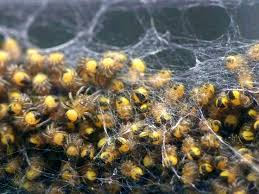 10 fascinating facts about spiders