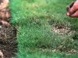 Alternatives To Grass In Backyard by Renovate Or Redo Your Lawn Landscaping Hgtv