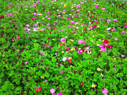why you should sow wildflower seeds during winter hgtv