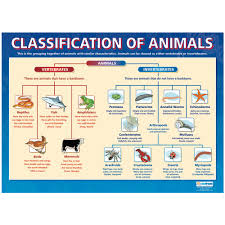 classification of animals poster the consortium education