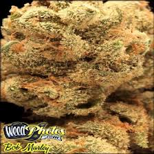 bob marley marijuana strain pictures the weed blog