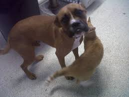 rescue a boxer dog hello about to rescue boxer mix and need opinions boxer forum